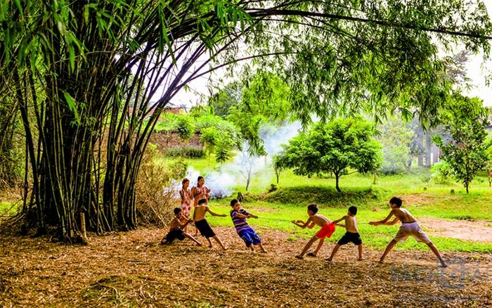 Hình ảnh cây tre Việt Nam